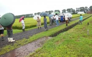 大雨注意報の中で、有機生産者仲間農家が集まって、「提携米栽培確認」に各生産者の田圃を回りました。(013.09.02 撮影)