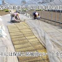 苗箱並べ(動画)
