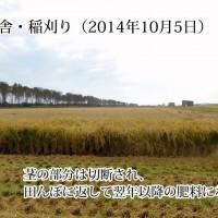 稲刈り作業(動画)