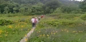 世界自然遺産新緑ツアー~前回の白神山地田代湿原~