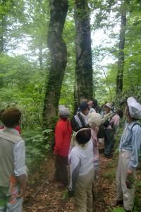 岳岱自然観察教育林を散策する我が農舎一行 2013.7