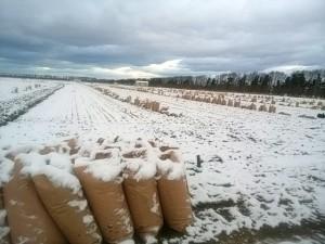 籾殻の袋を並べたら雪になりました。 昨秋は雪が早く、暗渠工事の準備をしている間に雪の季節となりました。