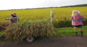 9月は連日最後の草取りに追われました。  6月の異常低温で、除草対策が遅れ、田んぼは雑草まみれ。 6月7月の2ヶ月連日、手取り除草に明け暮れましたが、雑草を取りきれず 最後の草取りは9月一杯かかりました。